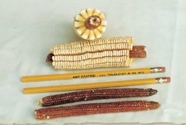 Pencil Cob